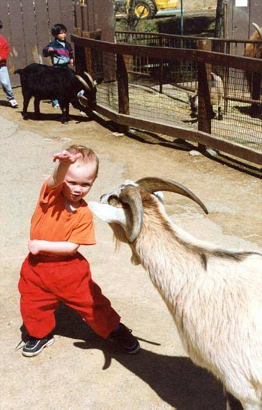 stupid goat
